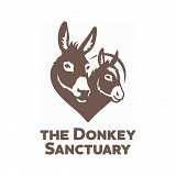 Visit the donkeys