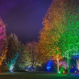 Garden illuminations at RHS Garden Rosemoor